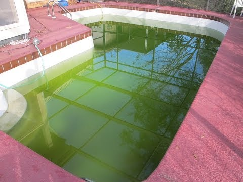 CLEAR EMERALD GREEN POOL WATER VS. SOLID GREEN WATER