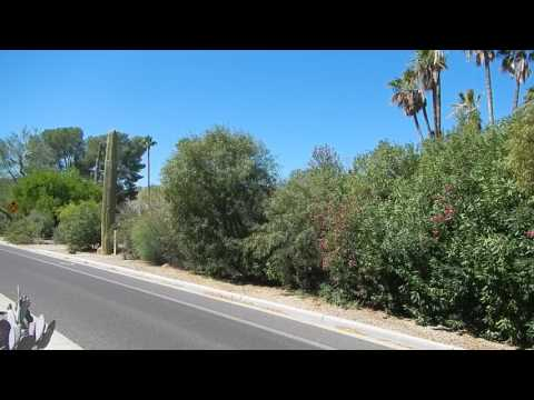 Fake Saguaro Cell Tower Kills Oleander Bush