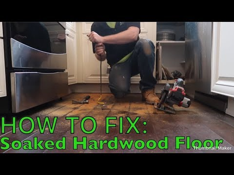 How to Fix Water Damaged Hardwood Floors | Merion Services