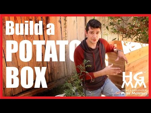 Growing Potatoes In a Box!