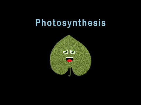 Photosynthesis/Photosynthesis for Kids