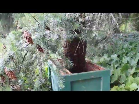 425-209-9859. Honey Bee Swarm Free Removal Auburn & Western WA  Poison Free Removal