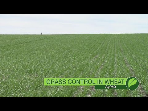 Grass Herbicides For Wheat #1045 (Air Date 4-15-18)