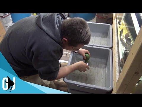 #516: TIME LAPSE Feeding 500 Axolotl Babies - Update Monday