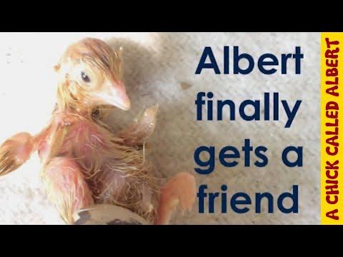Albert gets a friend
