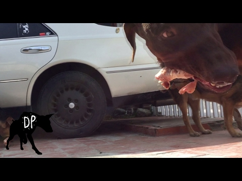 Can dogs eat frozen chicken?