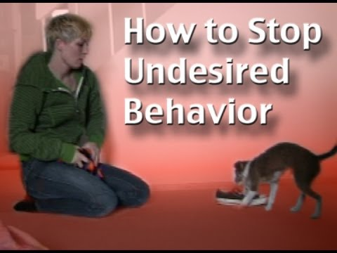How to stop unwanted behavior-  the positive interrupter