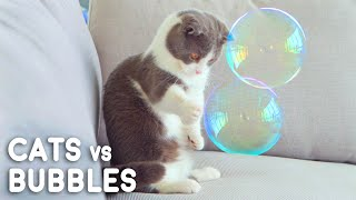 Cats vs Bubbles