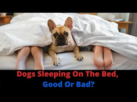Should Your Dog Sleep On The Bed With You? Will It Change Their Behavior?