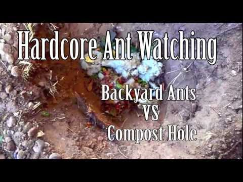 Ants Vs Compost  | Insect Watching