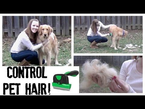 Control Pet Hair:  How to Groom Your Pet at Home | How to Deshed Your Pets