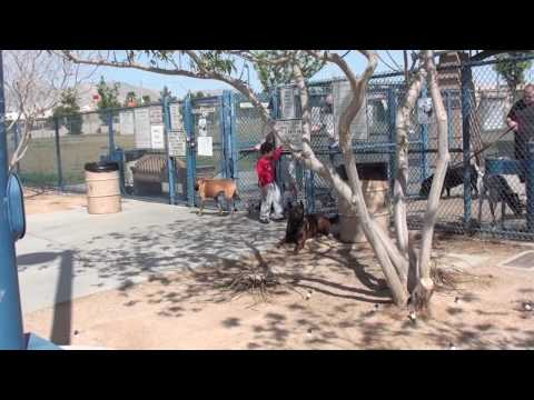 Dog park training - How to put the other side of fence to use