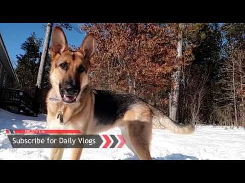 German Shepherd Playing in the Snow | Slow Motion Action