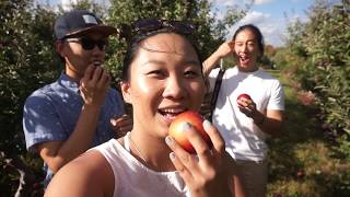 October Vlog 2017 - Apple Picking Adventures