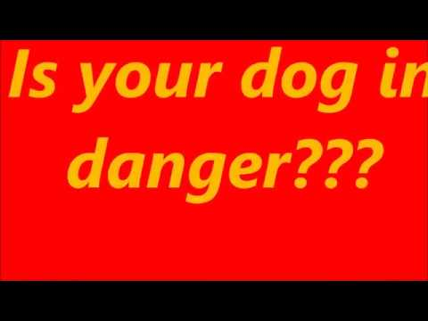 Dog owners should know this!!! Do You??