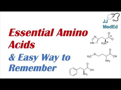Essential Amino Acids - Basics for Beginners - Biochemistry Lesson
