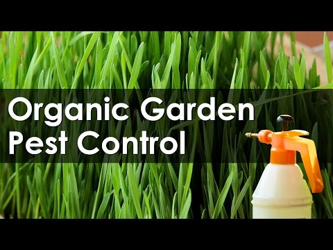Identify and Control the Garden Pests