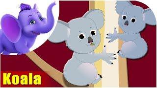 Koala - Animal Rhymes in Ultra HD (4K)