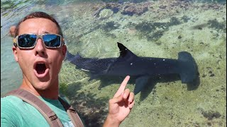 Almost Swam With Giant HAMMERHEAD SHARK!
