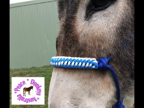How to make a zipper sinnet paracord noseband for rope halter for horse or donkey