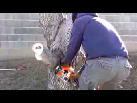 3 Cut Method to Removing Large Tree Branches
