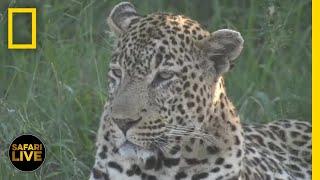 Safari Live - Day 312 | National Geographic