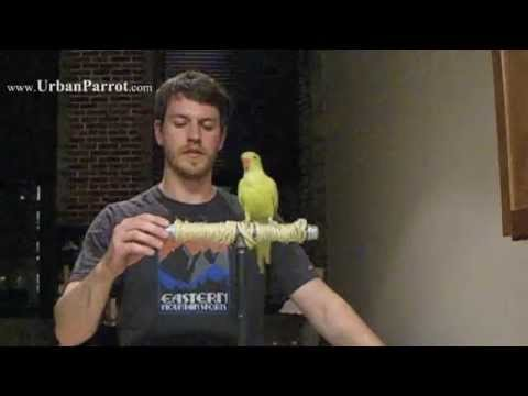 HOW TO MAKE: Portable Parrot Perch