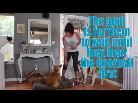 Stop Your Dog From Barking at the Door