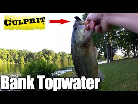 Topwater Bass Fishing FROM THE BANK - Fishing With Frogs & Toads