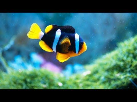How to Maintain Fish Tank When Away | Aquarium Care