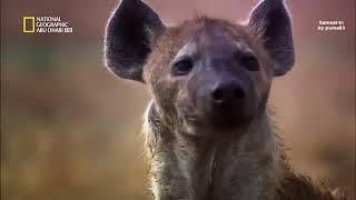 وثائقي الحياة البرية نهر زامبيزي