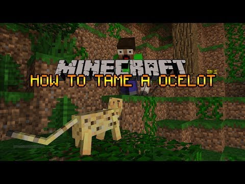 Minecraft - How To Tame A Ocelot [1.10]]