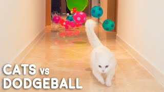 Cats vs Dodgeball