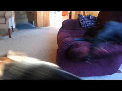 Cat tormenting Dog