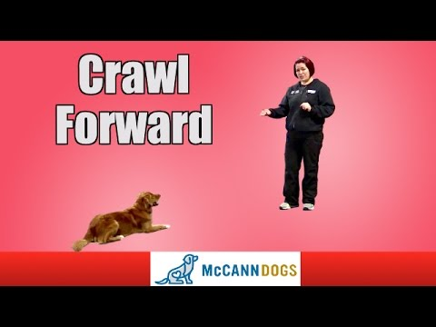 Dog Tricks: Crawl Forward On Command