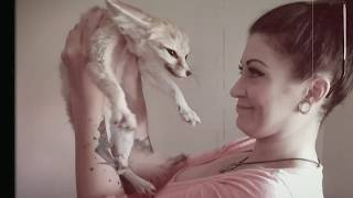 Fennec Fox Needed a Bath