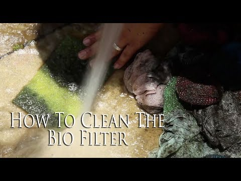 How To Clean Your Bio Filter