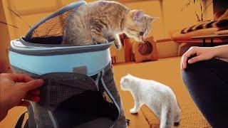 Der 1. Tag mit den Baby Katzen! 😍