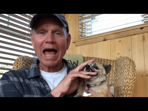 Guy Pets Chihuahua to Relax