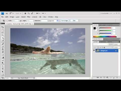 3.4 Cropping to a Specific Size: Adobe Photoshop CS4 Video