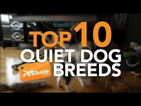 Top 10 Quiet Dog Breeds