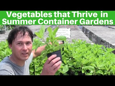Vegetables that Thrive in Container Gardens During the Summer Growing Season