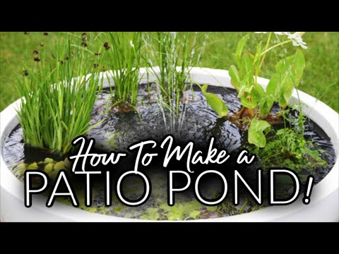 Make your very own Pond in a Pot! - Backyard Pond!
