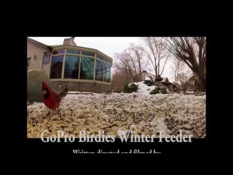 GoPro Birdies Winter Feed