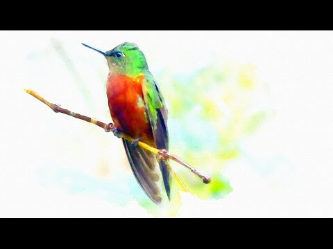 Painting Wildlife in Watercolours Using Photoshop Elements - A Tutorial HD