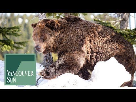 A bear-y good morning!