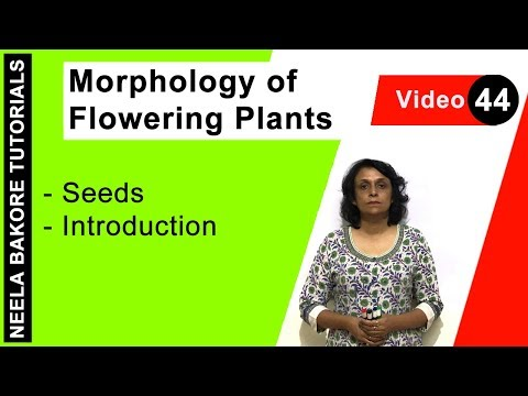 Morphology of Flowering Plants - Seeds - Introduction