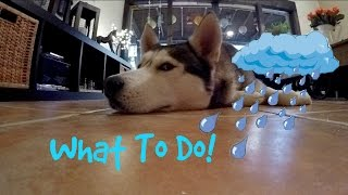 What to do With Your Dog on Rainy Days!