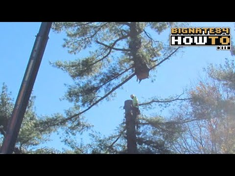 Tree Removal Time Lapse | Norfolk, MA