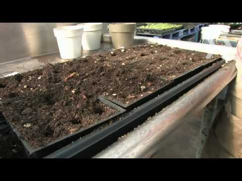 How to Start Seeds for Planting